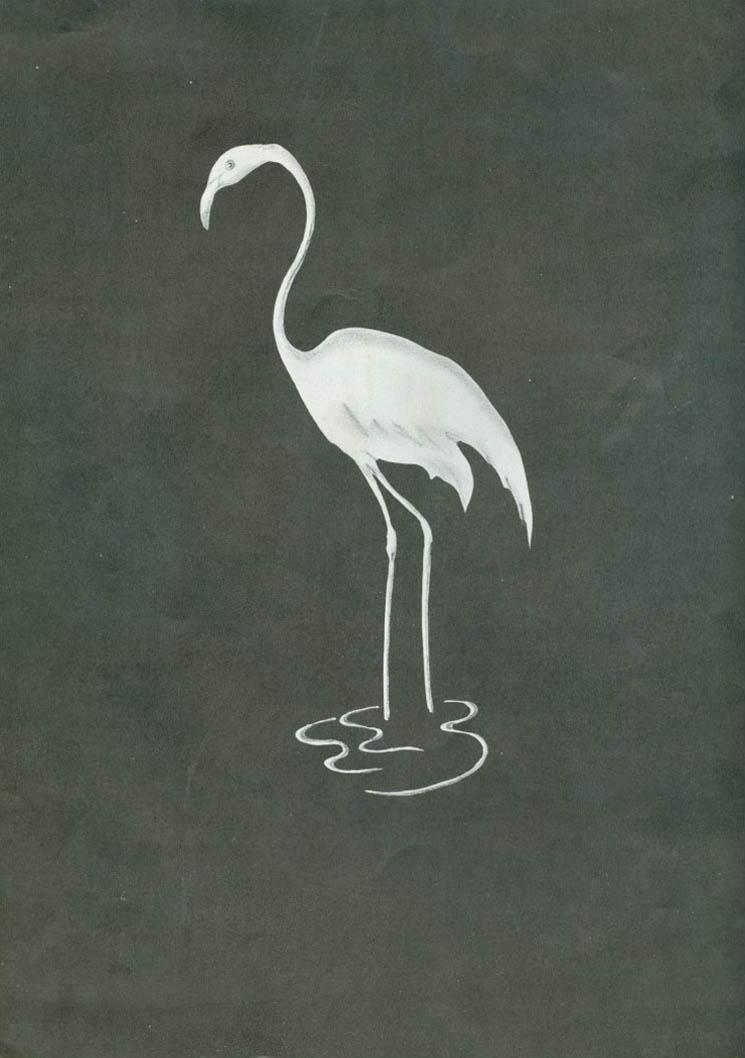 18.flamingo-back